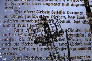 Humpencurling, Rudelschnupf & Hopfenzapfen – Teil 3: Grünes Gold