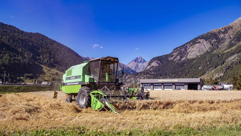 Die Zernezer Bio-Bergbraugerste des Peider Andri aus Lavin