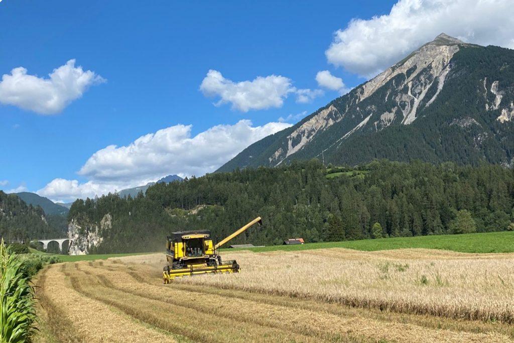 Read more about the article Braugerstenernte 2021 auf der Ranch Farsox, Alvaneu Bad GR
